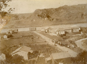 An early view of Awakino. Drovers are taking cattle through the main street.