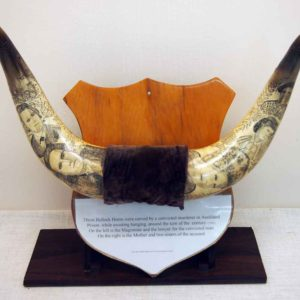 Scrimshaw Bullock Horns